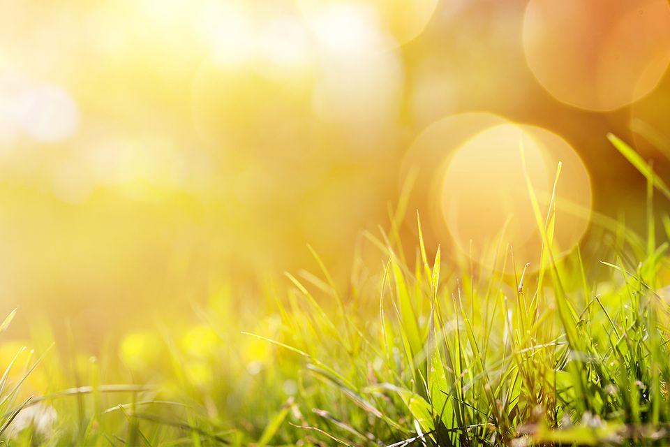 Pflanzen bei Sommerhitze: Rasen