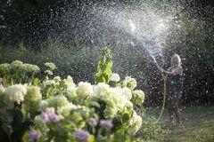 Pflanzen bei Sommerhitze: morgens gießen