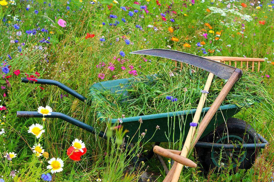 Blumenwiese mähen