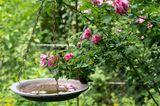 Mit Wasser gefüllte Vogeltränke im Garten