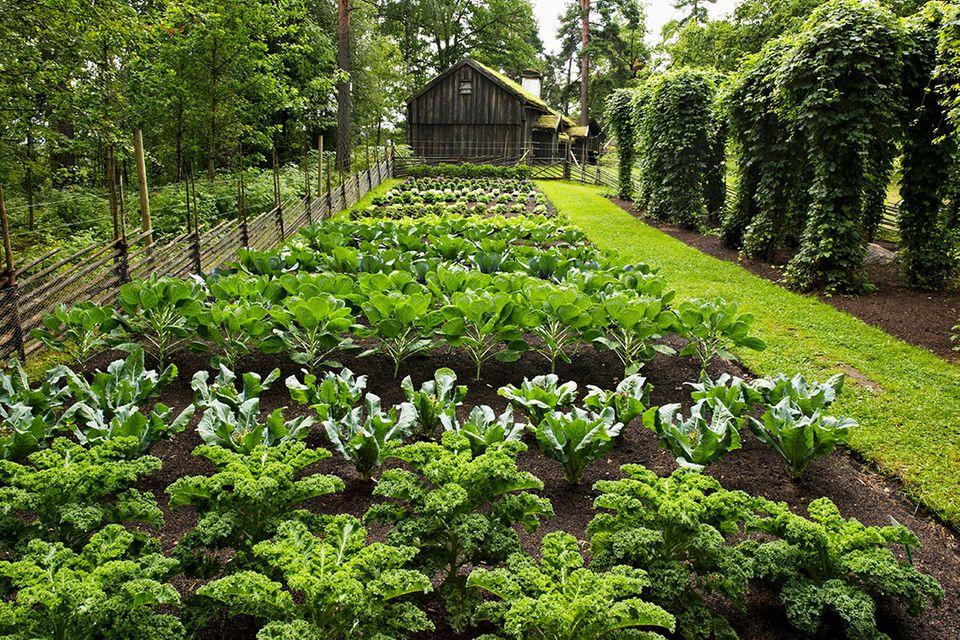 Gemüsebeet, Selbstversorger-Garten