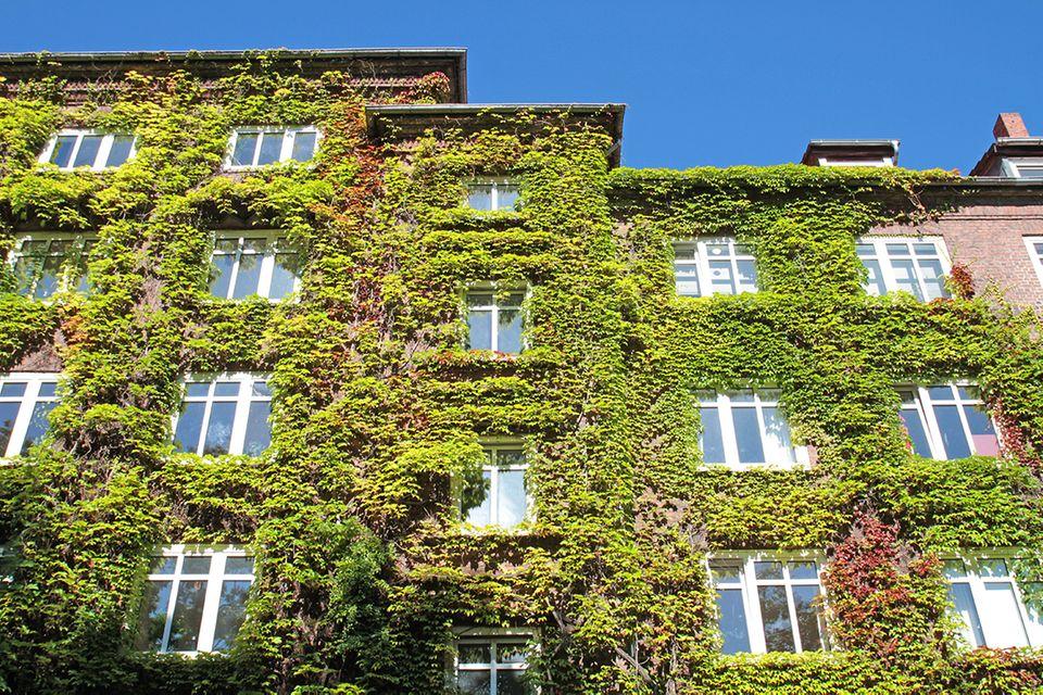 Grüne Fassaden