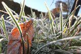 Garten winterfest machen: Rasen mähen und Herbstdüngung