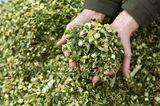 Garten winterfest machen: Schnittgut häckseln und zum Mulchen benutzen