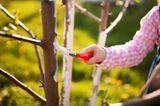 Garten winterfest machen: Kalkanstrich für Obstbäume