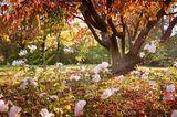 Garten winterfest machen: Rosen mit Laub anhäufeln