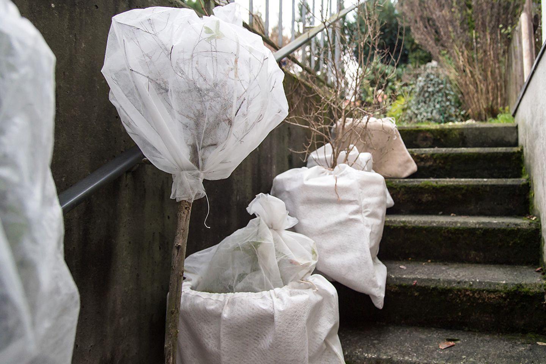 Garten winterfest machen: Kübelpflanzen überwintern - mit Vlies und Jute