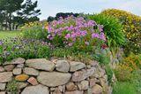 Bepflanzte Steinmauer
