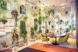 Hängepflanzen, Ampelpflanzen im Konferenzraum
