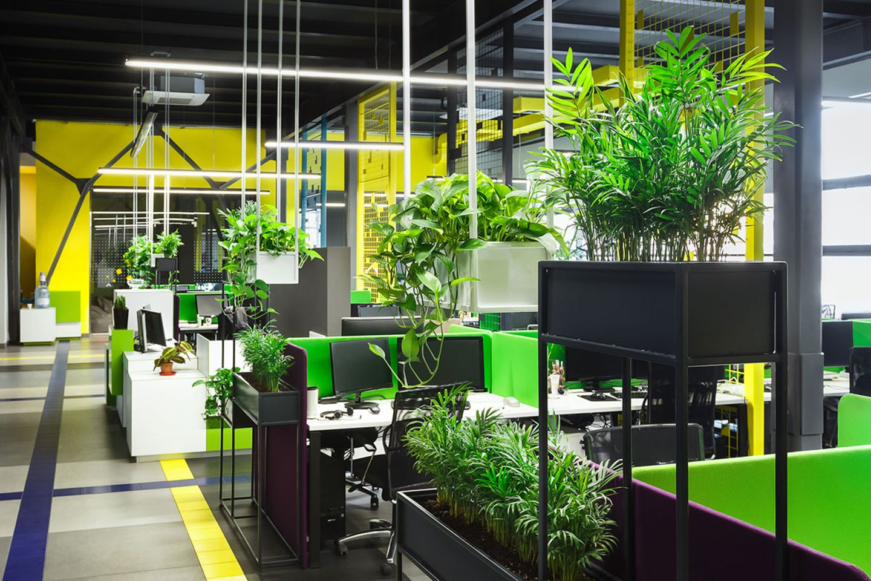 Büropflanzen, Pflanzen als Arbeitsplatzabtrennung