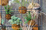 Kokedama – Hängepflanzen in Mooskugeln