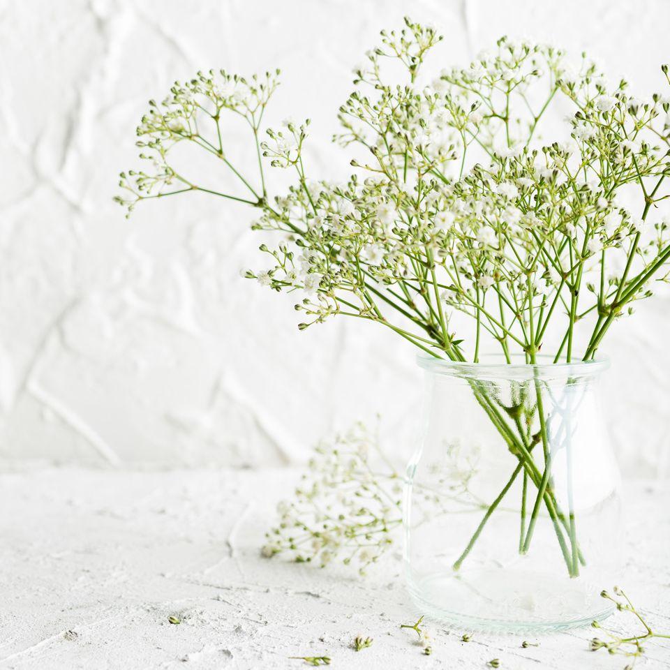 Gypsophila paniculata, Schleierkraut in der Vase