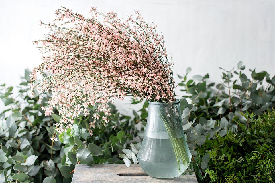 Rosa Edelginster als Zweige in einer Glasvase