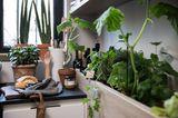 Kräuterbeet in der Küche - Siematic urban