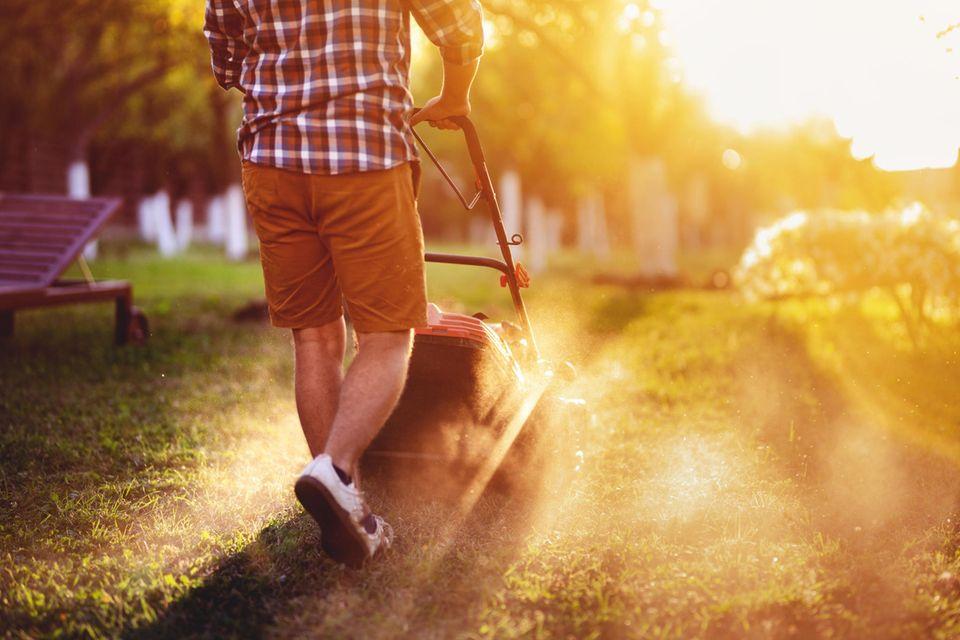 Rasenpflege: rasenmähen mit einem Rasenmäher