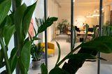 Grüne Oasen: Pflanzen im Abo - Bild 6