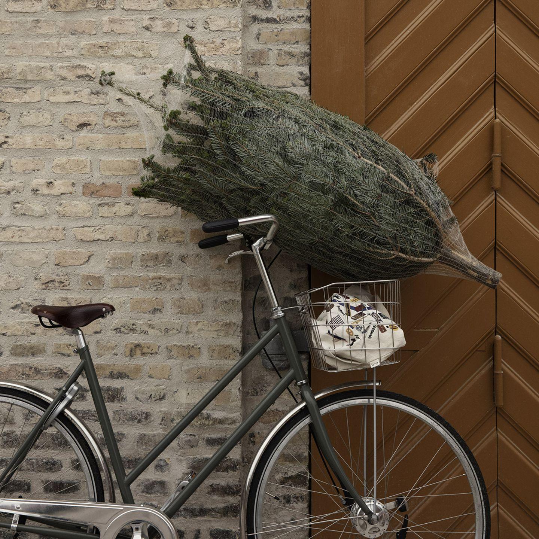Weihnachtsbaum im Netz, der auf dem Lenker eines Fahrrades liegt