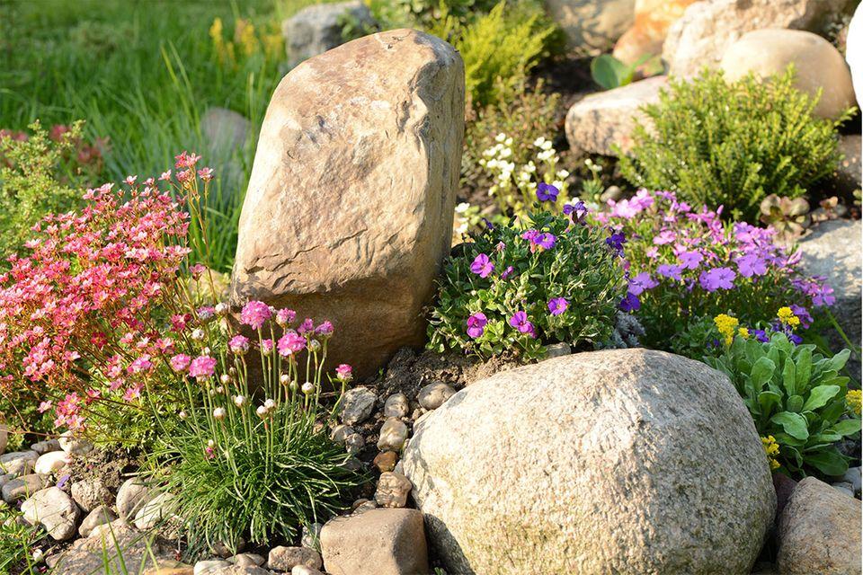 Ein alpiner Garten mit Steinen und robusten Bodendeckern
