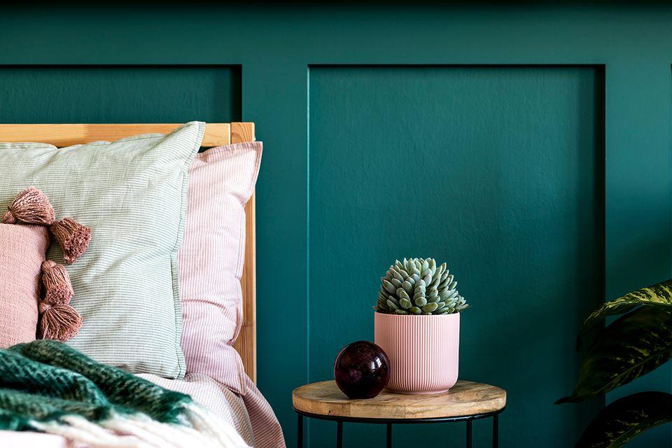 Sukkulente in einem rosafarbenen Topf auf dem Nachttisch im Schlafzimmer vor einer dunkelgrünen Wand.