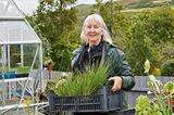 Dyffryn Fernant Garden in der walisischen Wildnis - Verkauf von Stecklingen