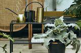 Vergoldete Gießkannen von Nordal umringt von verschiedenen Zimmerpflanzen