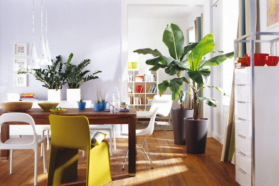 Urban Jungle – wohnen mit Pflanzen