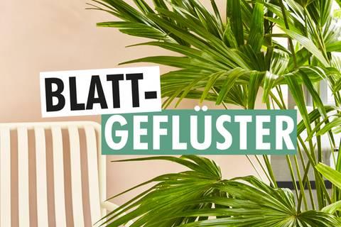 Blattgeflüster – Der Zimmerpflanzenpodcast von SCHÖNER WOHNEN, COUCH und Pflanzenfreude.de
