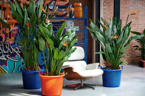 Folge 4: Pflanzen als Designobjekte. Inszenierung von und mit Zimmerpflanzen