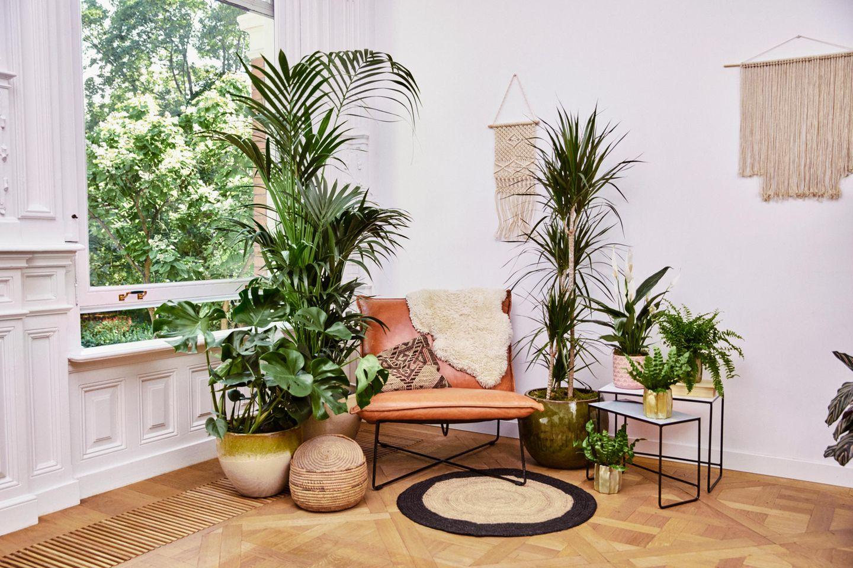 Folge 5: Pflanzen für die Seele – Waldbaden im Wohnzimmer