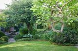 Trmpetenbaum und Hortensien im Schattengarten