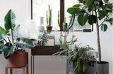 Grünpflanzen in Gefäßen und auf der Fensterbank